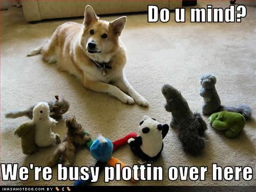 funny-dog-pictures-busy-plottin